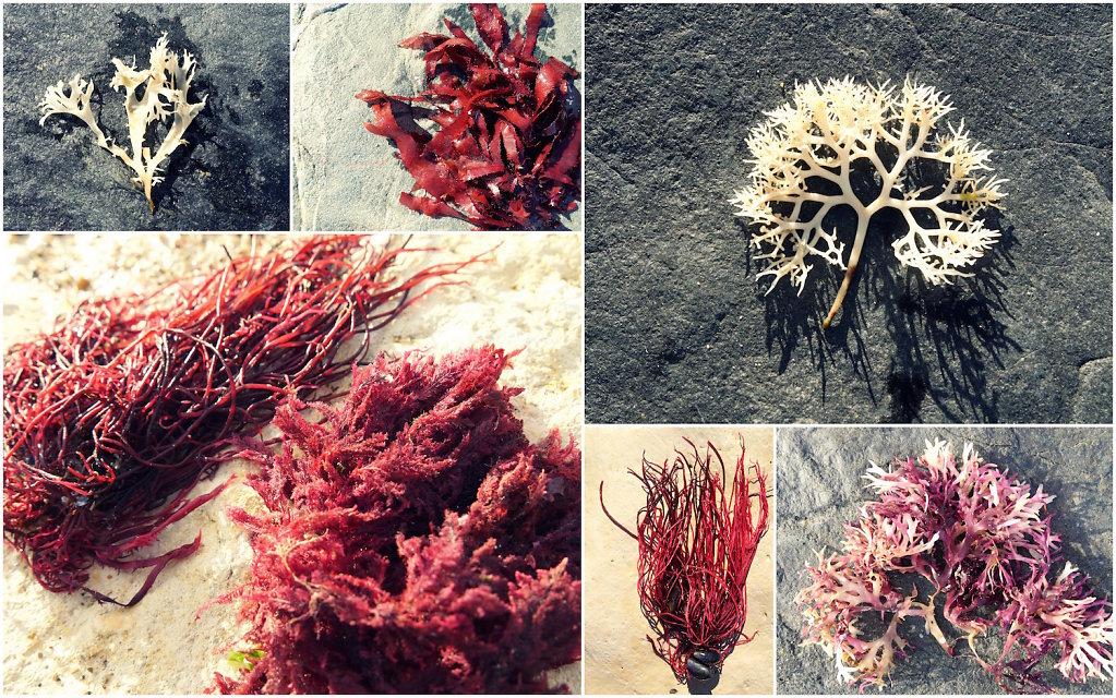 Auswahl-Meerblumen1.jpg
