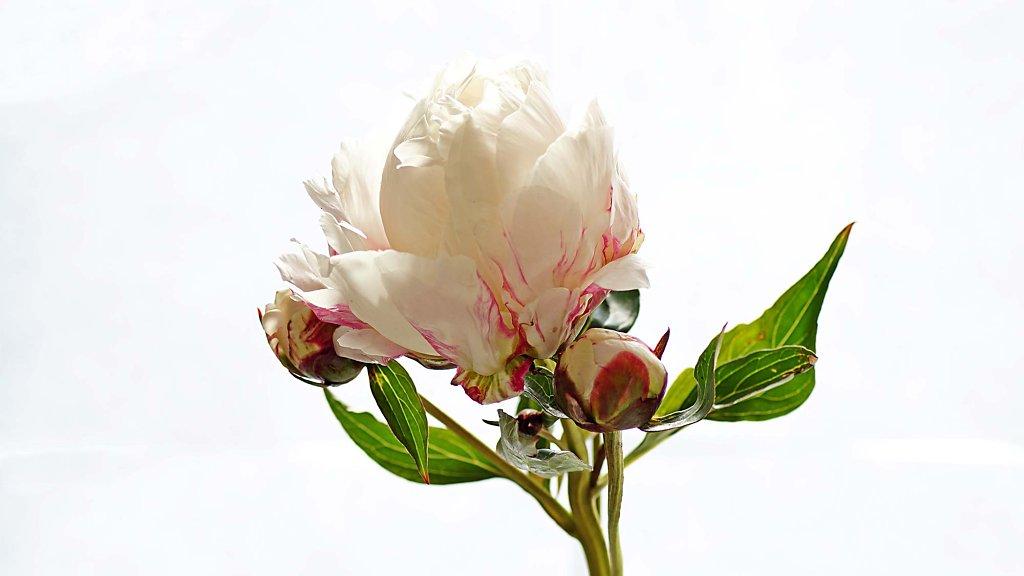 floraheld-2.jpg